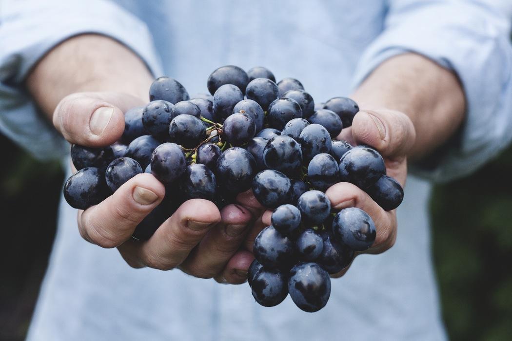 Query not provided: Come posizionare un sito ecommerce vendere vino online